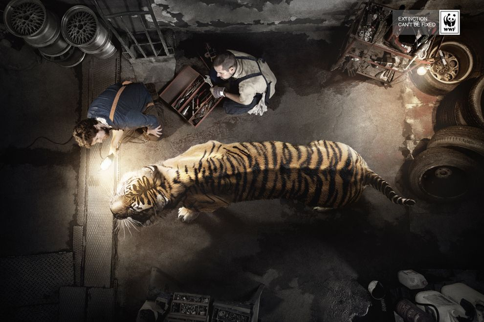 """Emotional. More WWF. """"Extinction can't be fixed"""" The"""