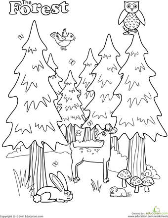 Forest Coloring Page Worksheets, Camping and Camping theme