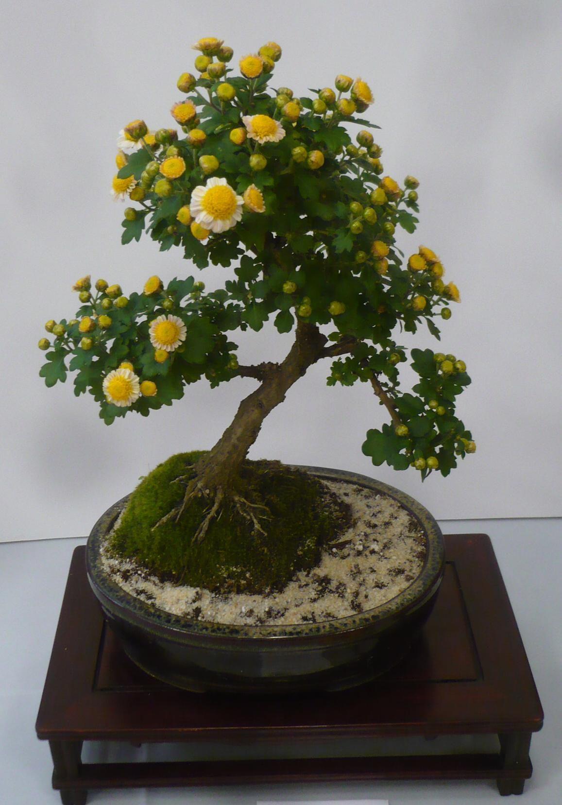 unusual bonsai plants Buscar con Google Bonsai
