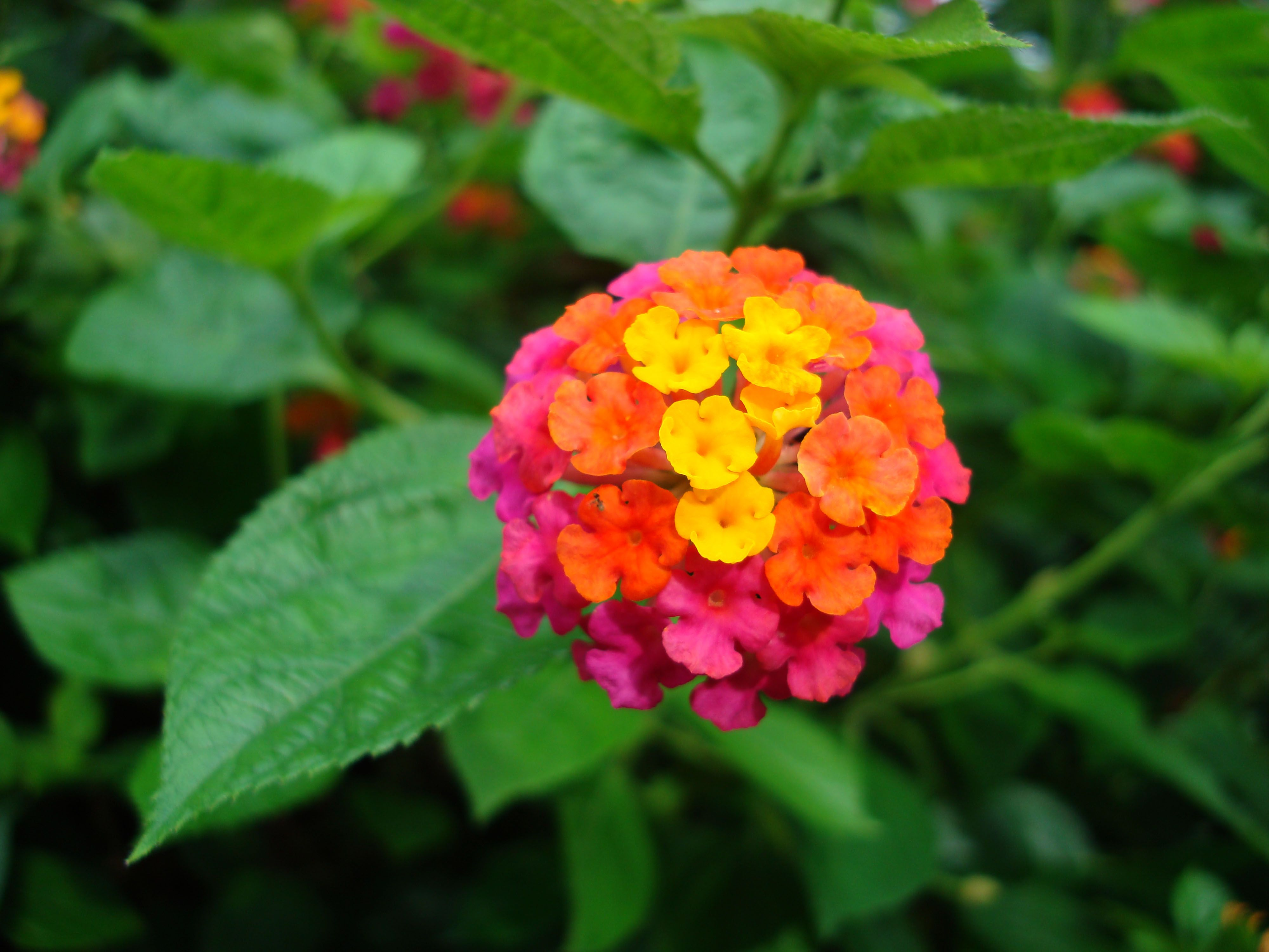 tropical flowers FLOWERS Tropical,garden,flowers