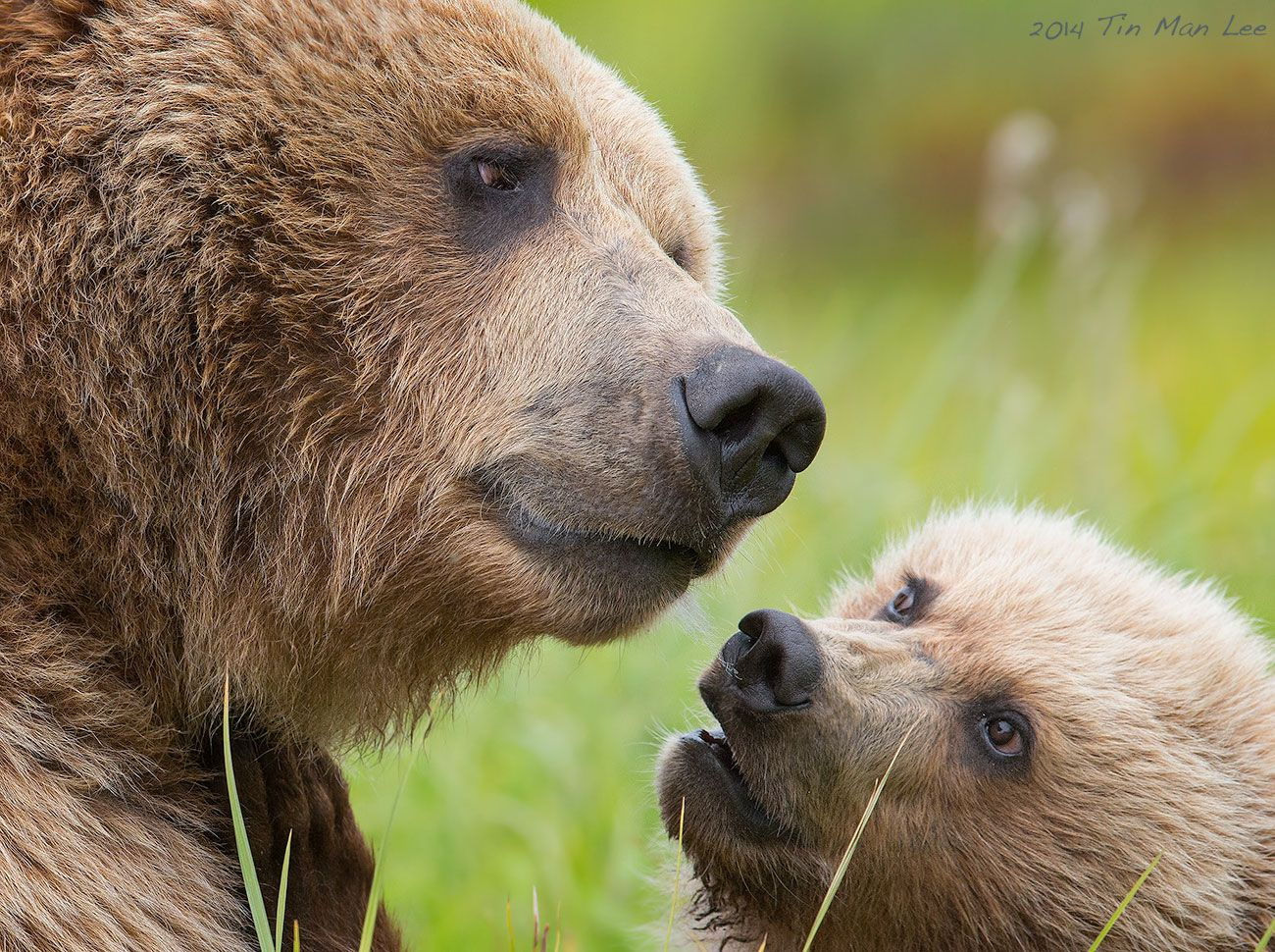 The Mama Bear Looked So Wise As If Listening To The Story
