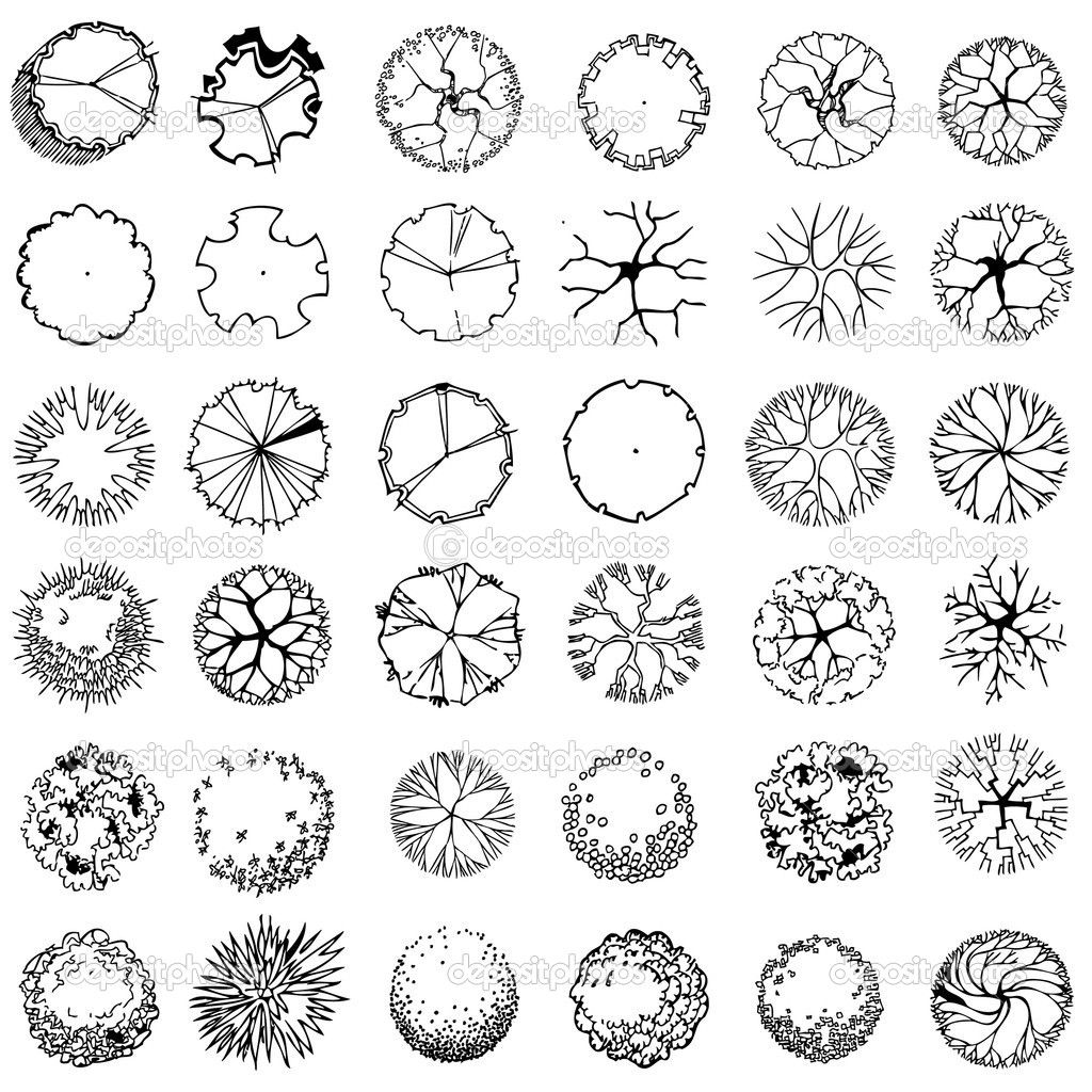 palm tree plan graphic Google Search plan graphics