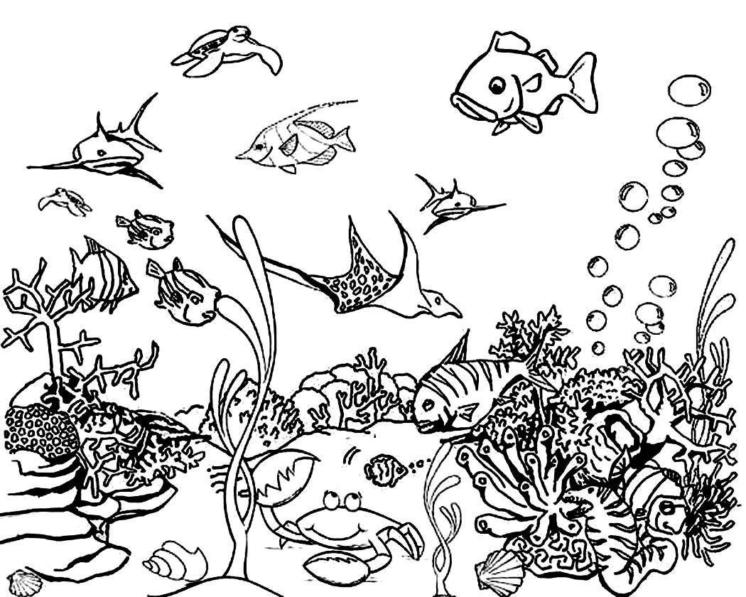 Image Result For Ocean Coloring Pages Coloring Animals