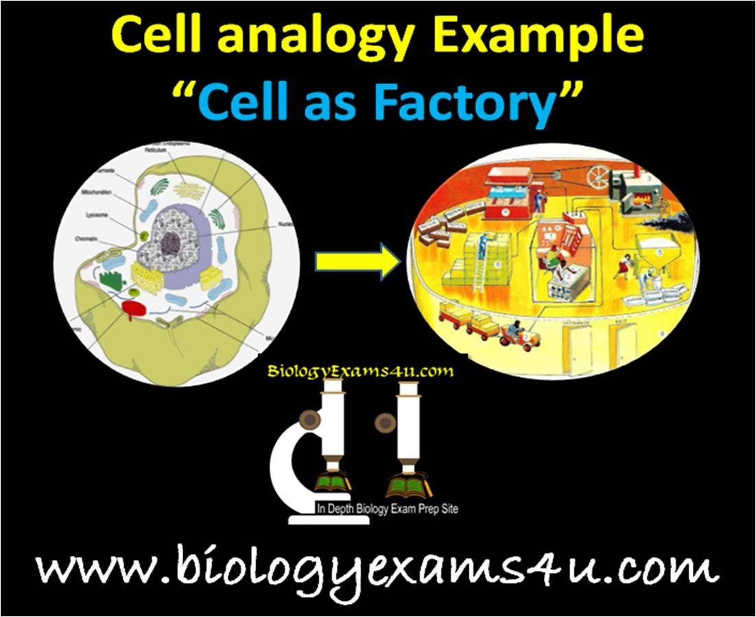 A Simple Video On Cellogy Cell As A Factory To