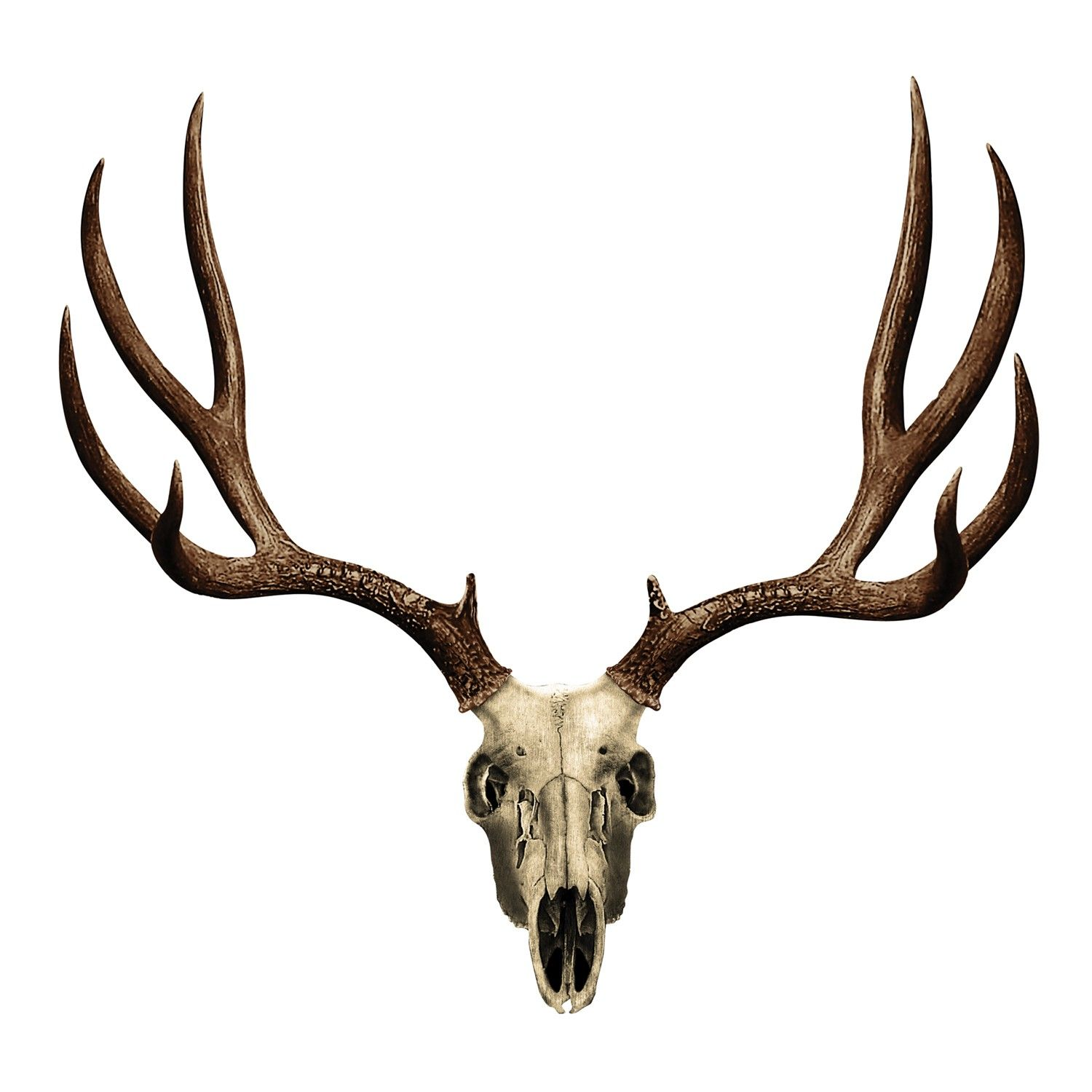 Best Deer Skull Clip Art 14218