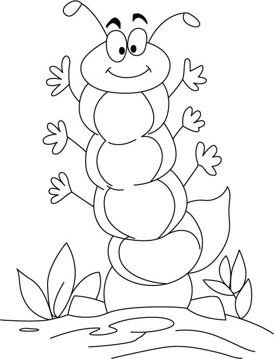 1000 images about bug lesson on pinterest coloring pages