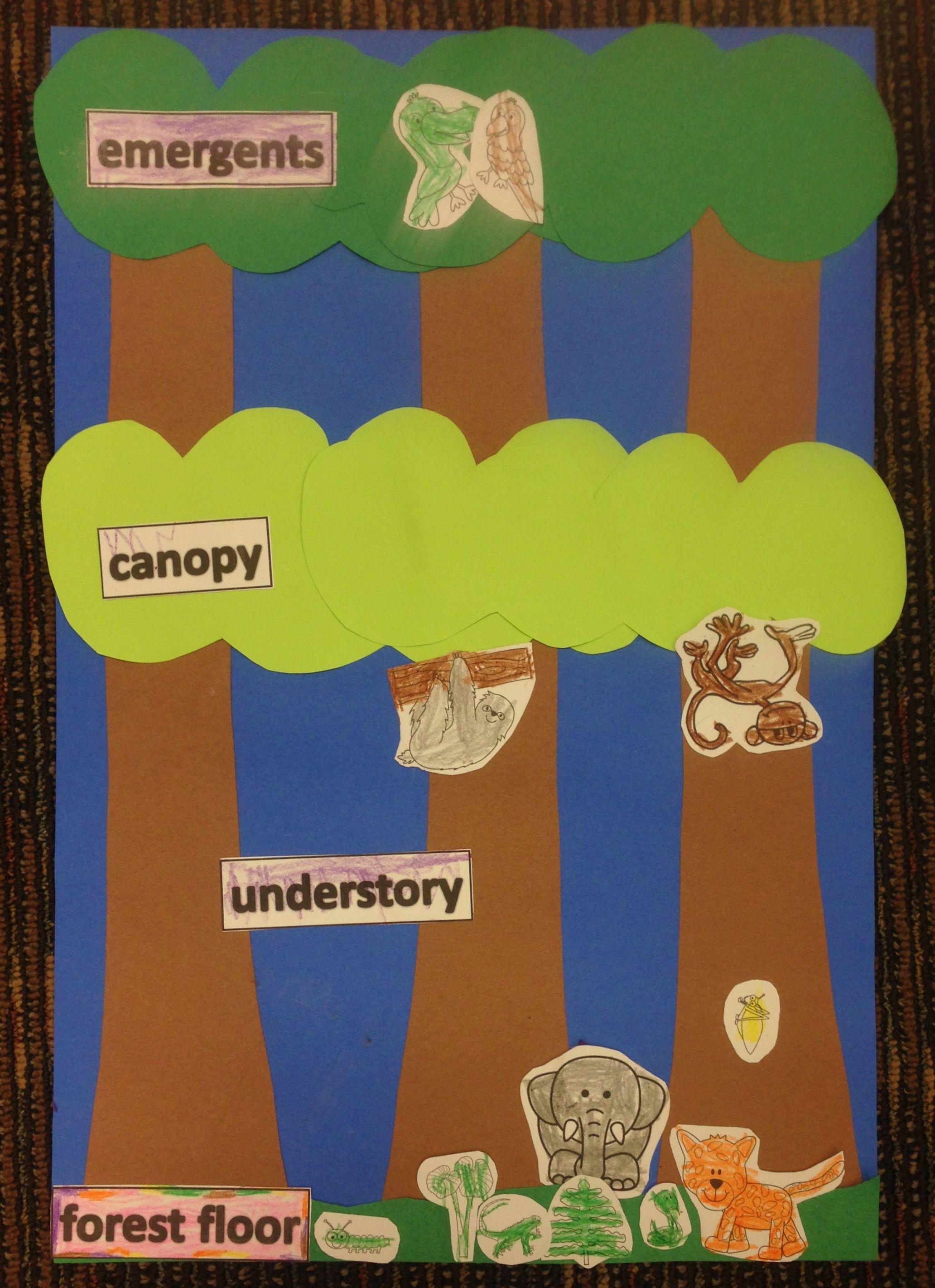 Rainforest Theme