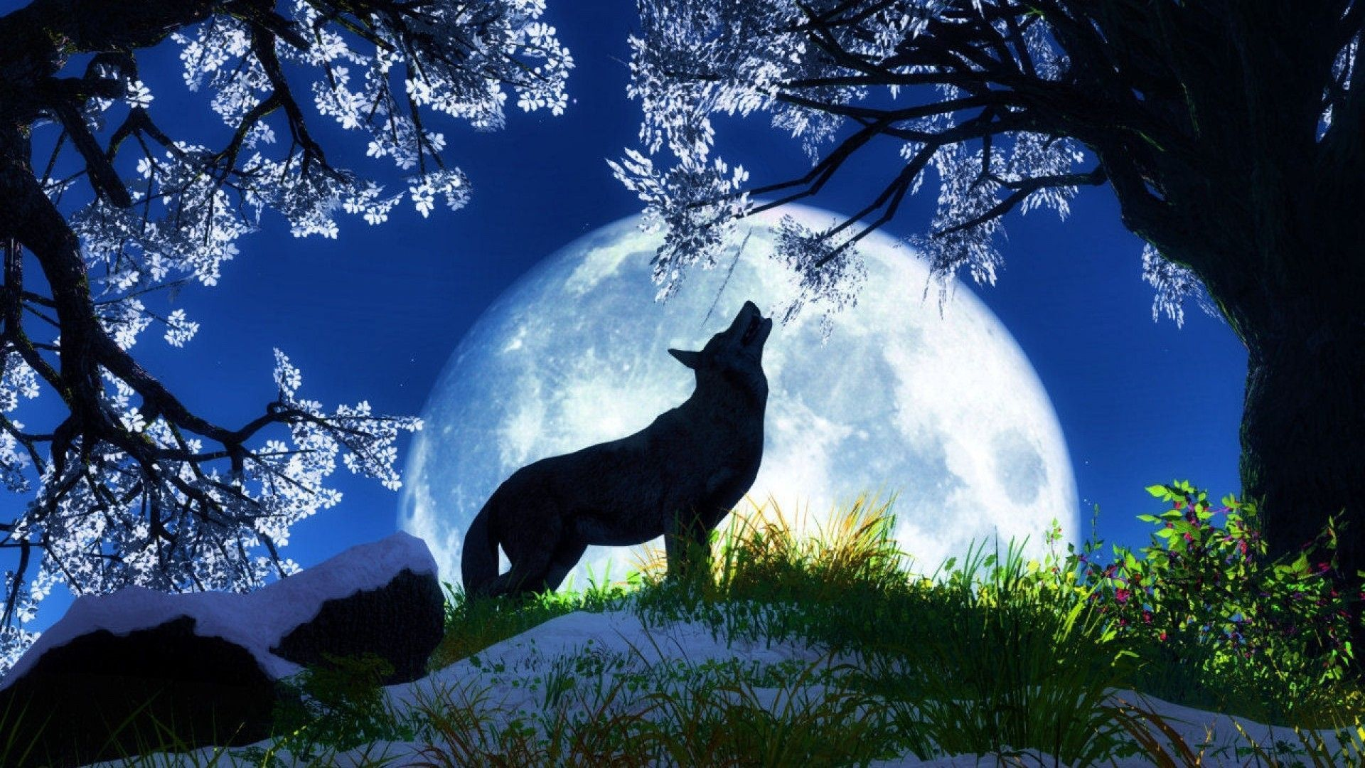 wolf hd wallpapers backgrounds wallpaper 1920×1080 wolf