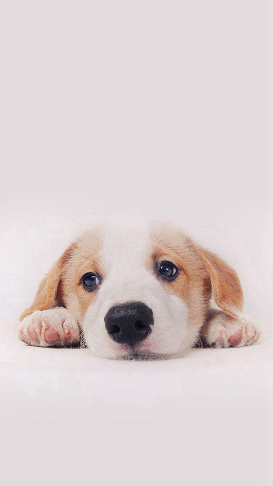 cute puppy dog pet #iphone #6 #plus #wallpaper | iphone 6
