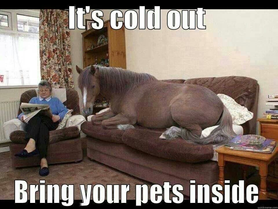 It's cold outside bring your pets inside Dogs Are Family