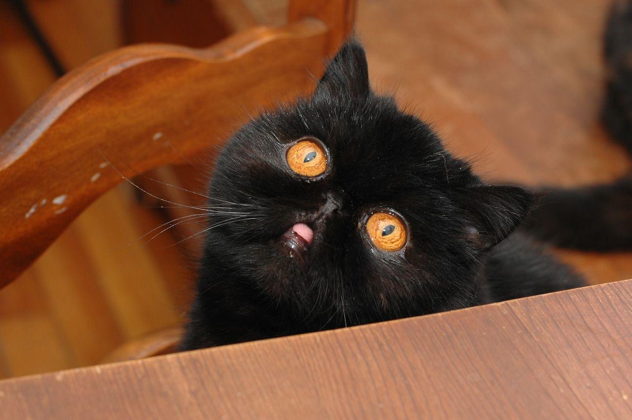 black cat with amazing orange eyes Those Mysterious