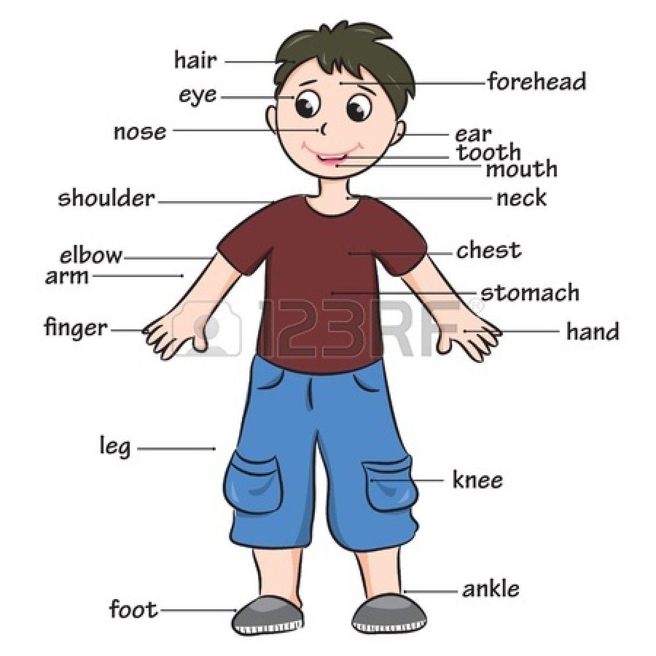 Cartoon Child Vocabulary Of Body Parts