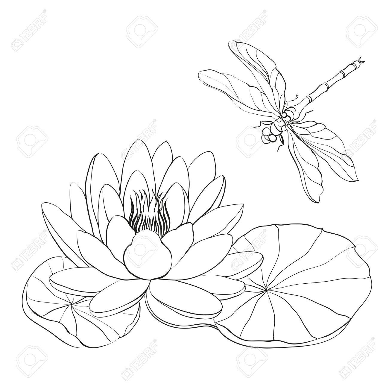 Lily Cliparts Stock Vector And Royalty Free Lily