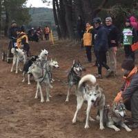 Récord de participantes en el Campeonato de España de Mushing tierra en Ólvega