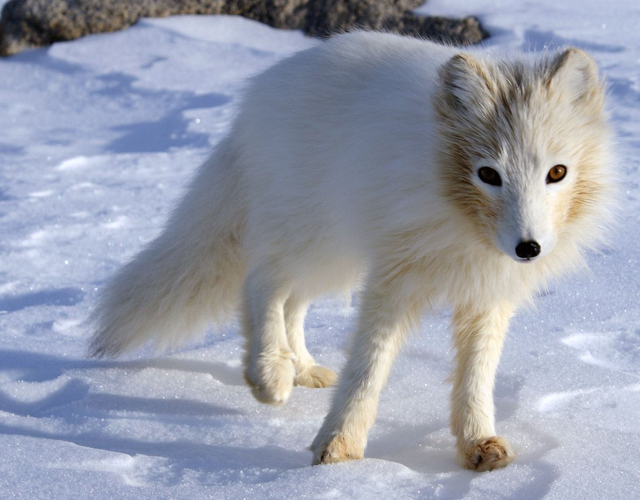 fauna of Antarctica Related Keywords & Suggestions for