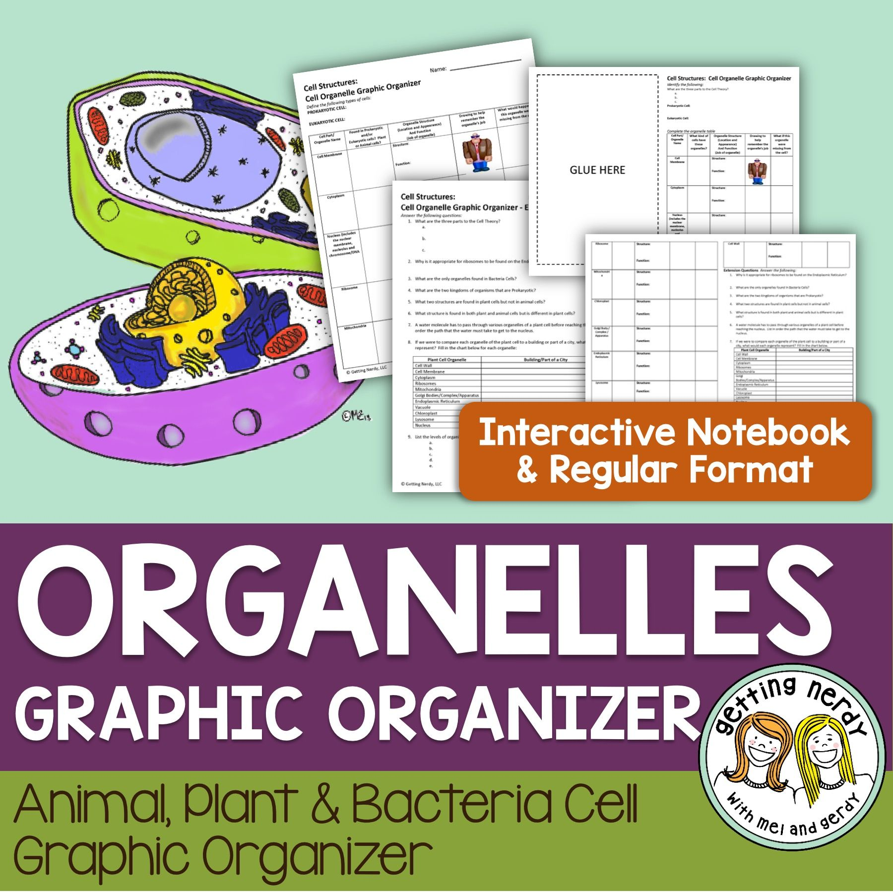 Cell Organelles Structure Amp Function Graphic Organizer