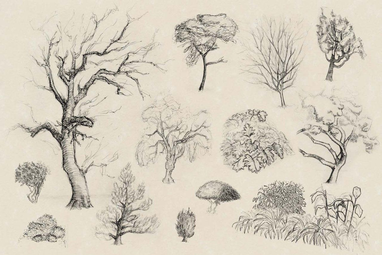 How to Draw Realistic Trees, Plants Bushes and Rocks