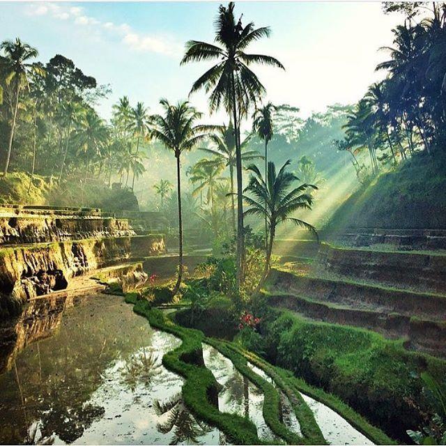 Rice Fields, Tegalalang, Bali Photo by mahakemala