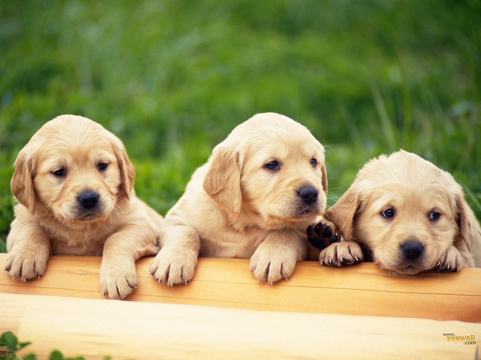 dogs wallpapers hd pictures one hd wallpaper pictures | hd