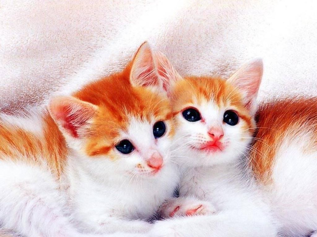 cute kittens & cats photos to twitter share to