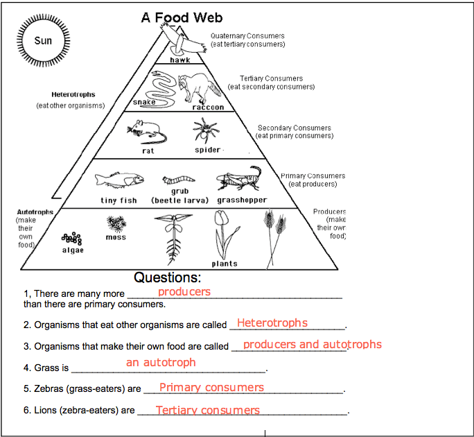 28 Food Web Chain Worksheet 5 Best Images Of
