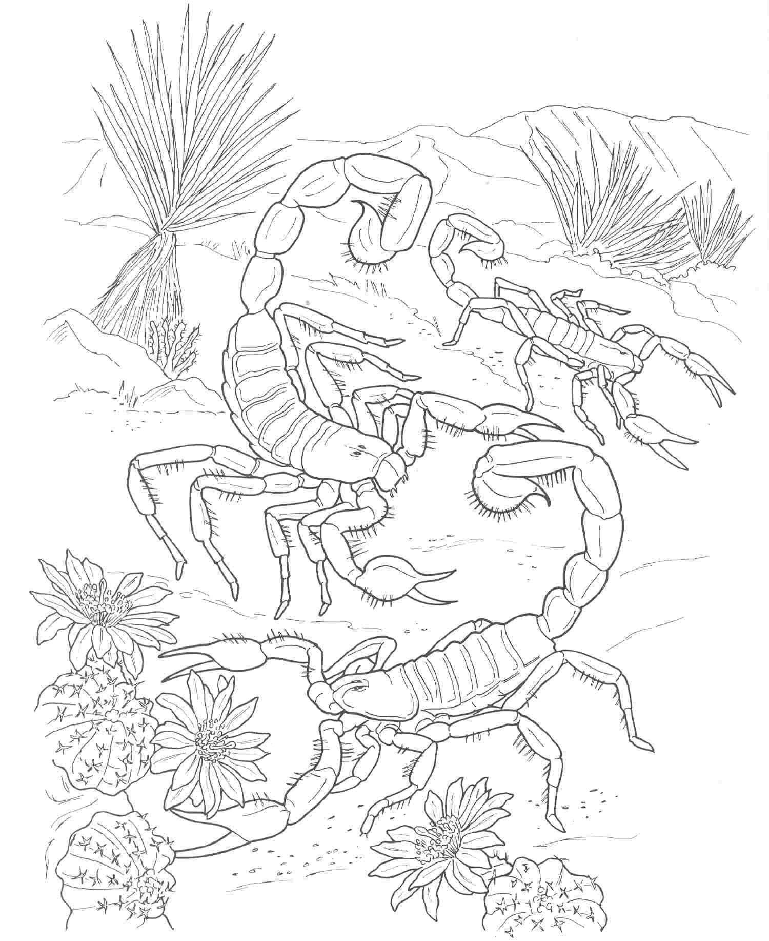 Coloring Pages For Adults Realistic Animals