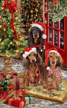 Longhair Dachshund Christmas Greetings Christmas Dogs