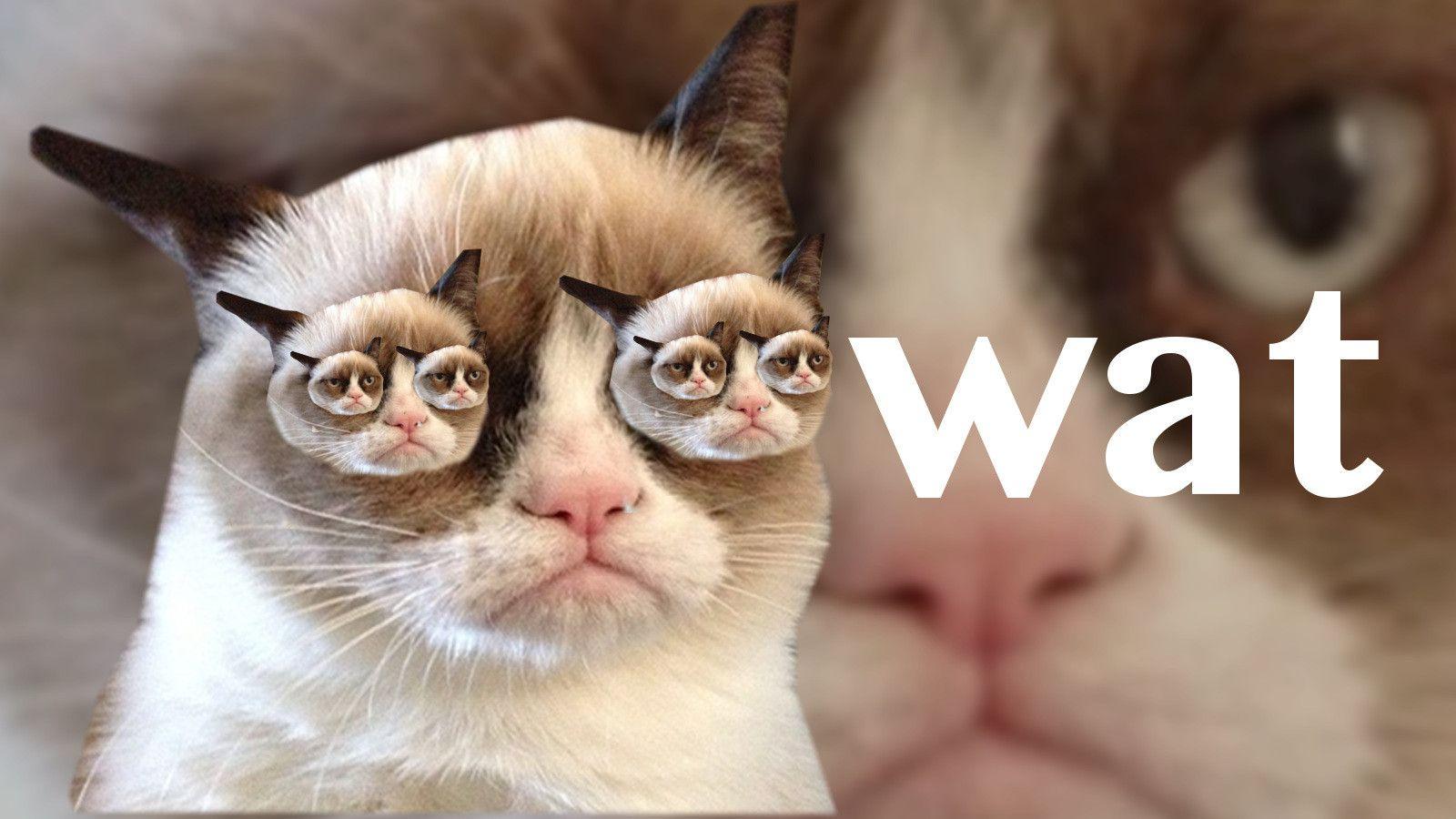 My second grumpy cat wallpaper Grumpy cat, Cat and