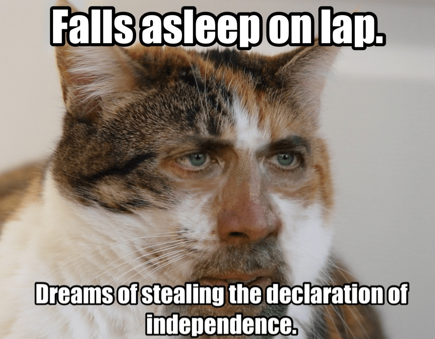 cat meme Nicolascagecats • Cage cat wants to be a meme