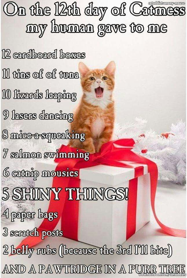 12 days of catmas Normally I hate that song, but this