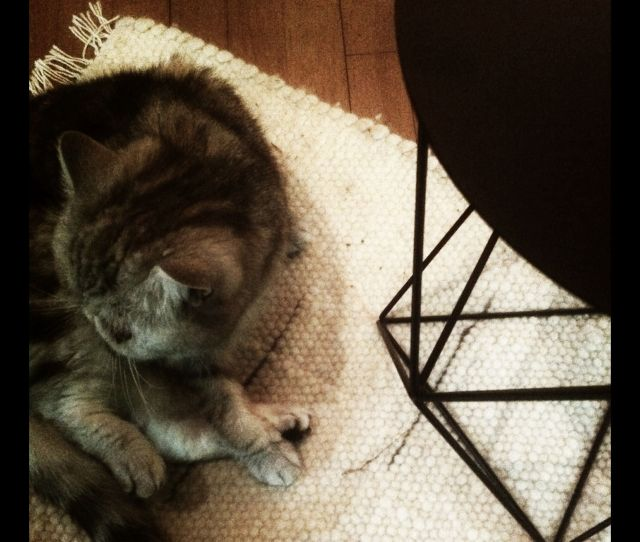 Sugar Approves Of The Beekman Boys Wool Pet Rug I Picked Up Last Weekend At The