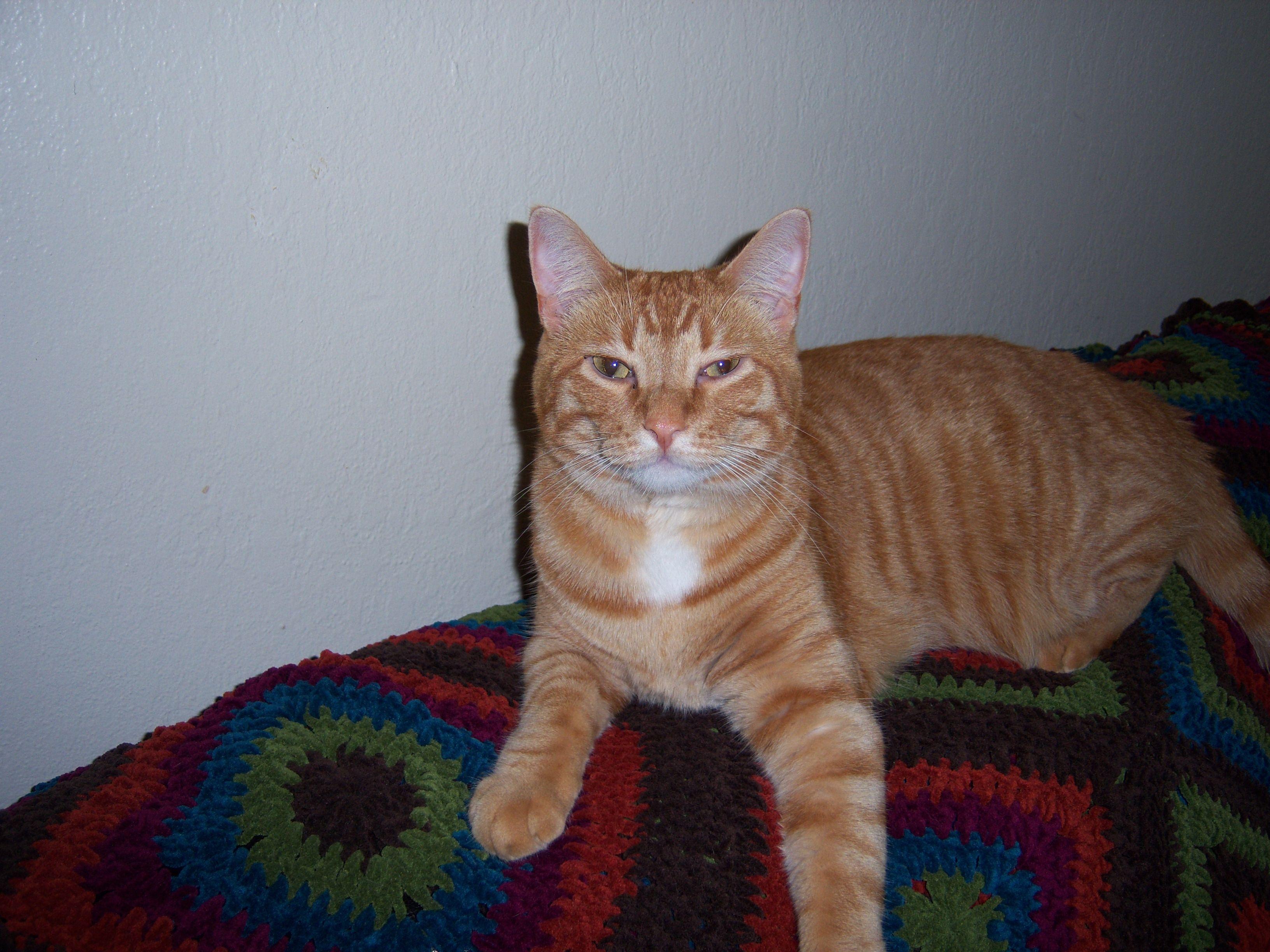 LOST CAT! Southern Idaho. Neutered male orange tabby