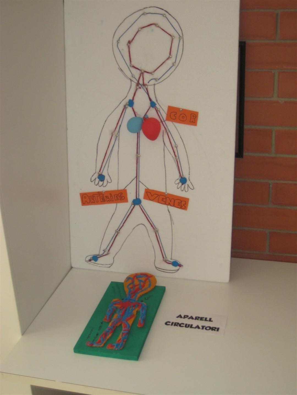 Maqueta De L Aparell Circulatori Realitzada Pels Alumnes