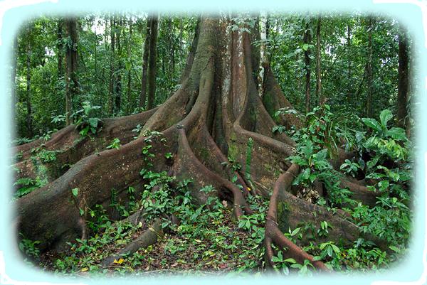 Tropical Rainforest Biome TropicalRainforest Biome