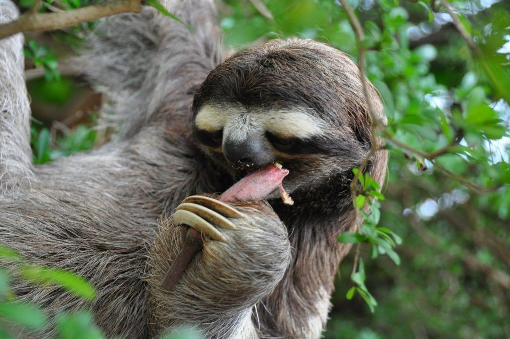 Cute Sloth Funny Picture HD Wallpaper Animal Funny Photos