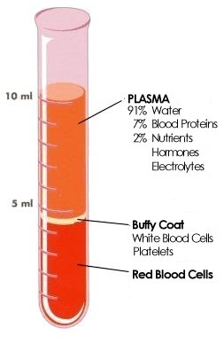 CBC blood composition Mind Body Spirit Pinterest