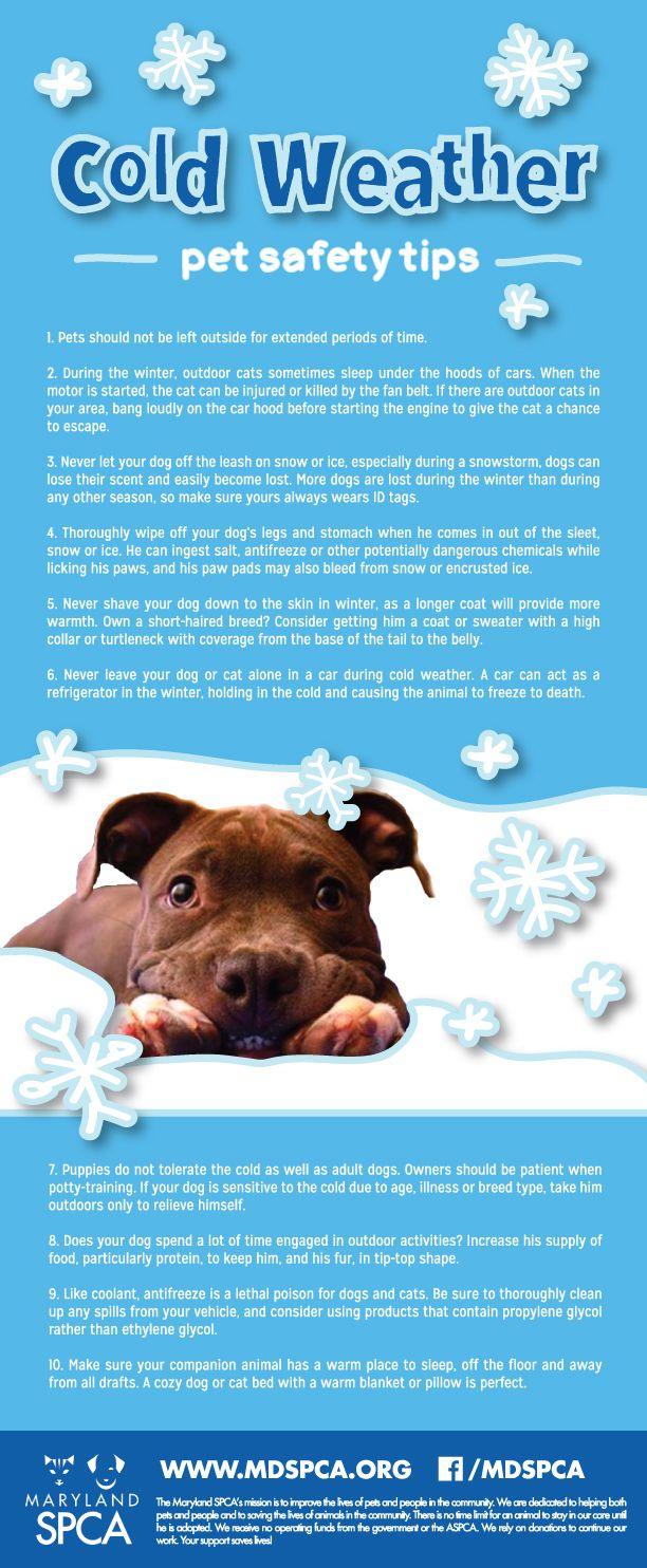 Pets and freezing weather Dog Training, Dog Stuff, Dog