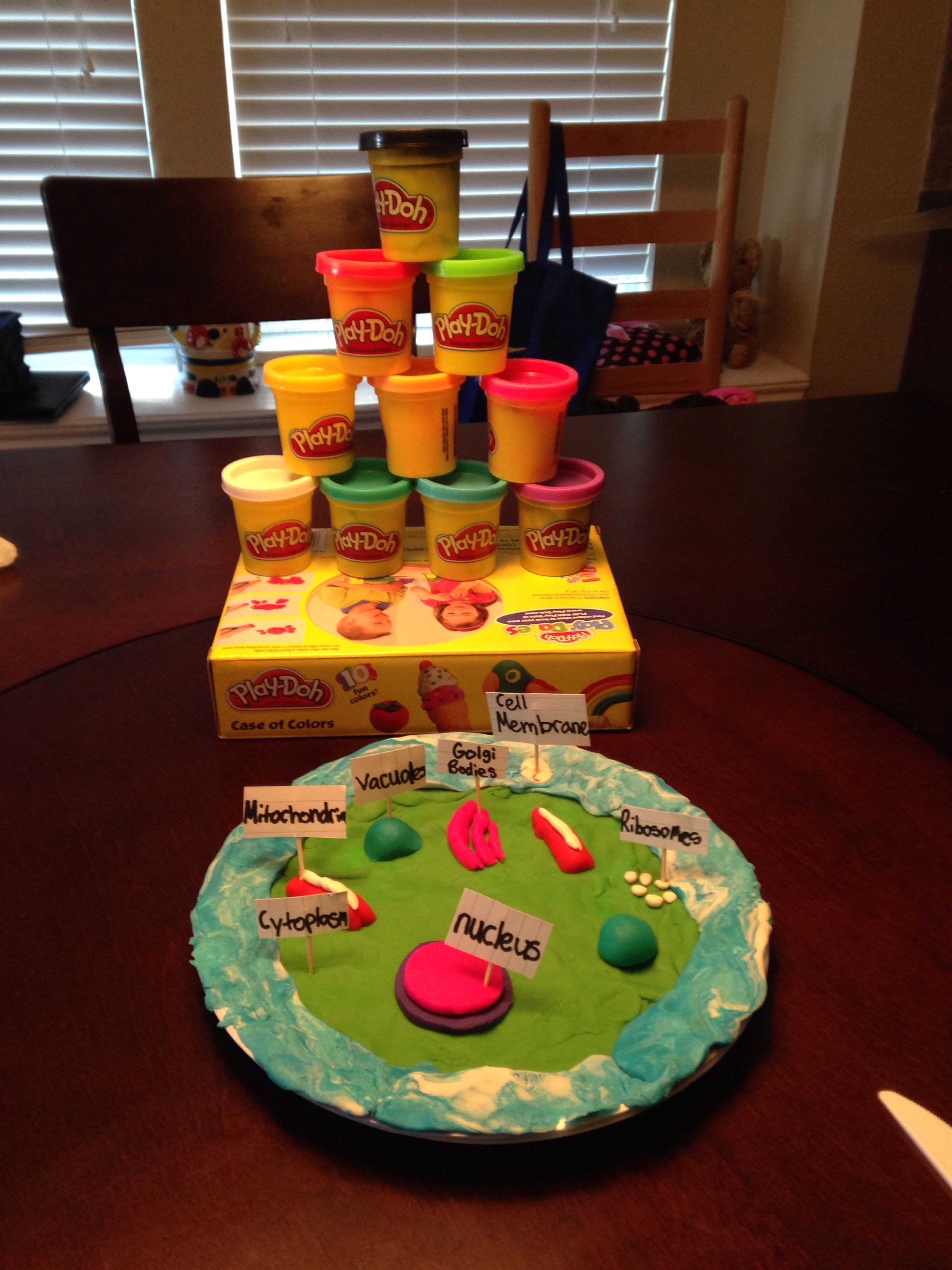 I made this 3D cell of a animal Cell using these playdoh