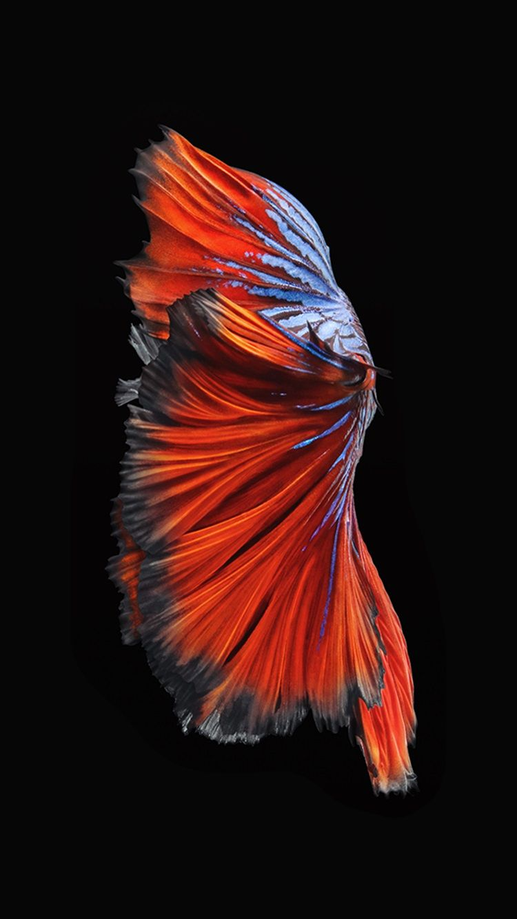 IPhone Fish Backgrounds Source Iphone 6s Betta Live Wallpaper Imagewallpapers Co