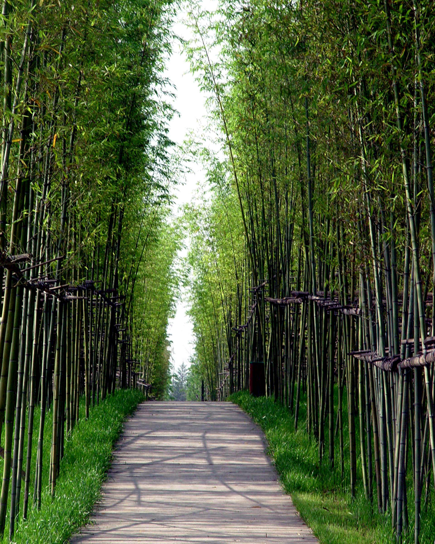 The Floating Gardens — Yongning River Park, Taizhou City