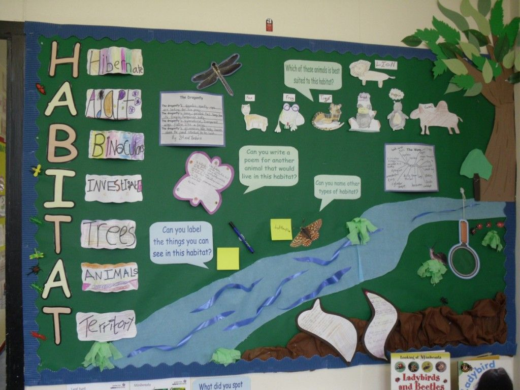 Habitat Bulletin Board This Is A Good Example Of A Simple Board You Could Have The Class Work