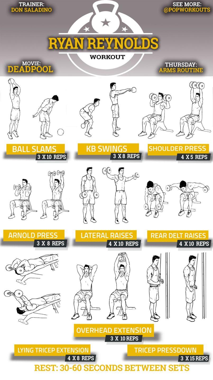 Biceps Workout Plan Pdf – Blog Dandk
