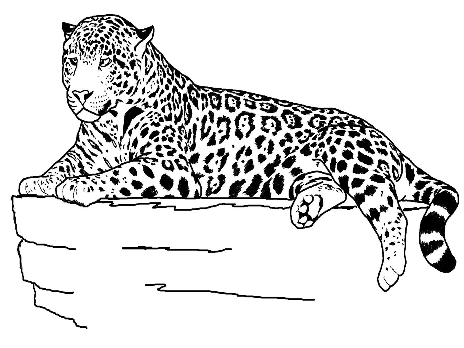 Zoo Animal Coloring Pages also available are farm animals