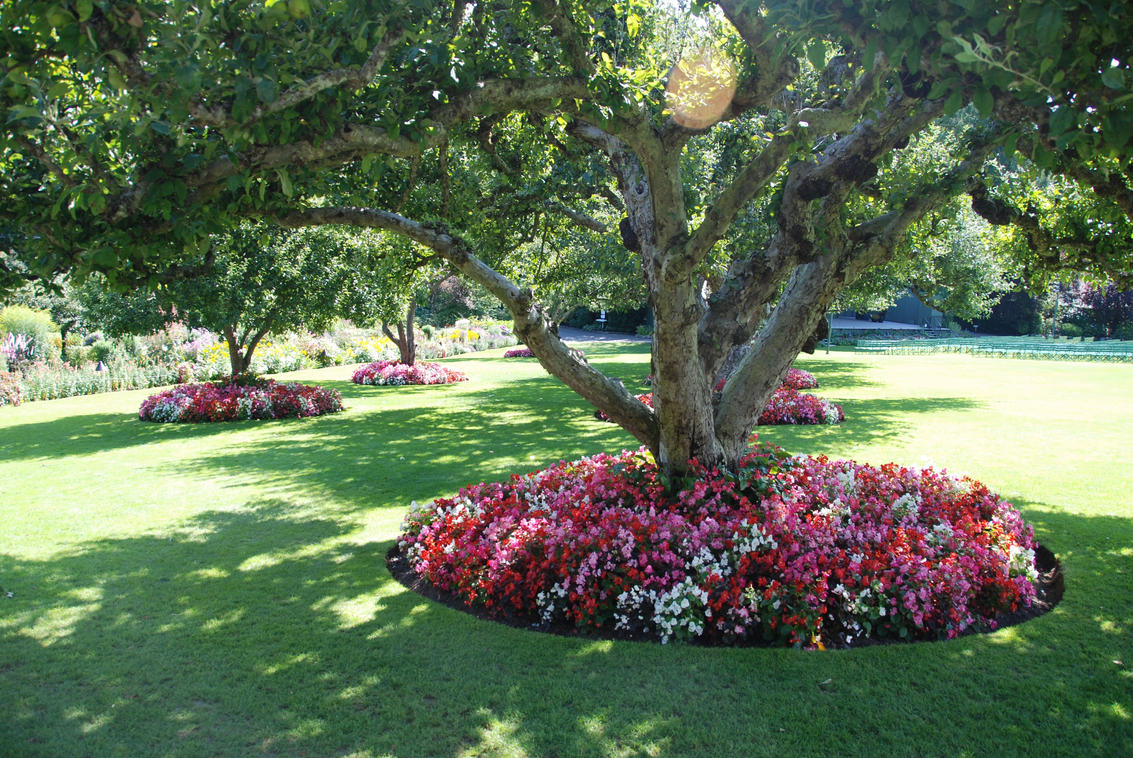 planting under trees.I want to do this to our big tree in