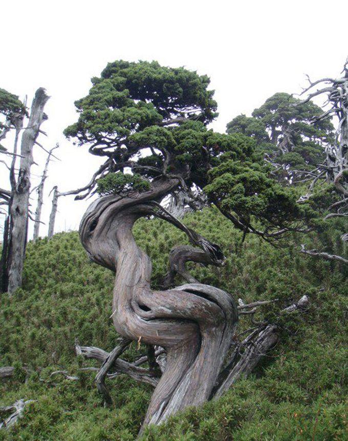 natural bonsai. natures bonsai Pinterest Bonsai and