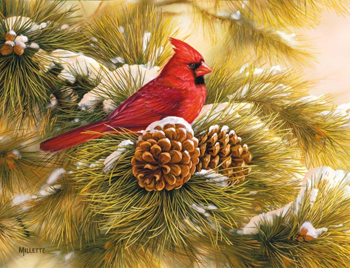 December Dawn Cardinal Christmas Cards Christmas Nature