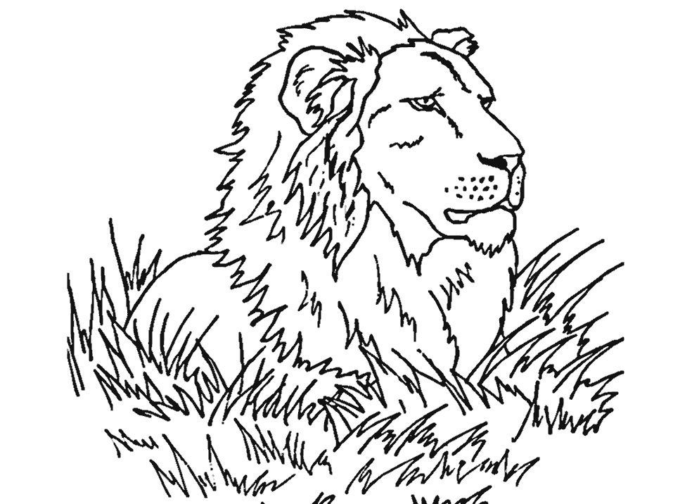 coloring coloring pages and lion on pinterest