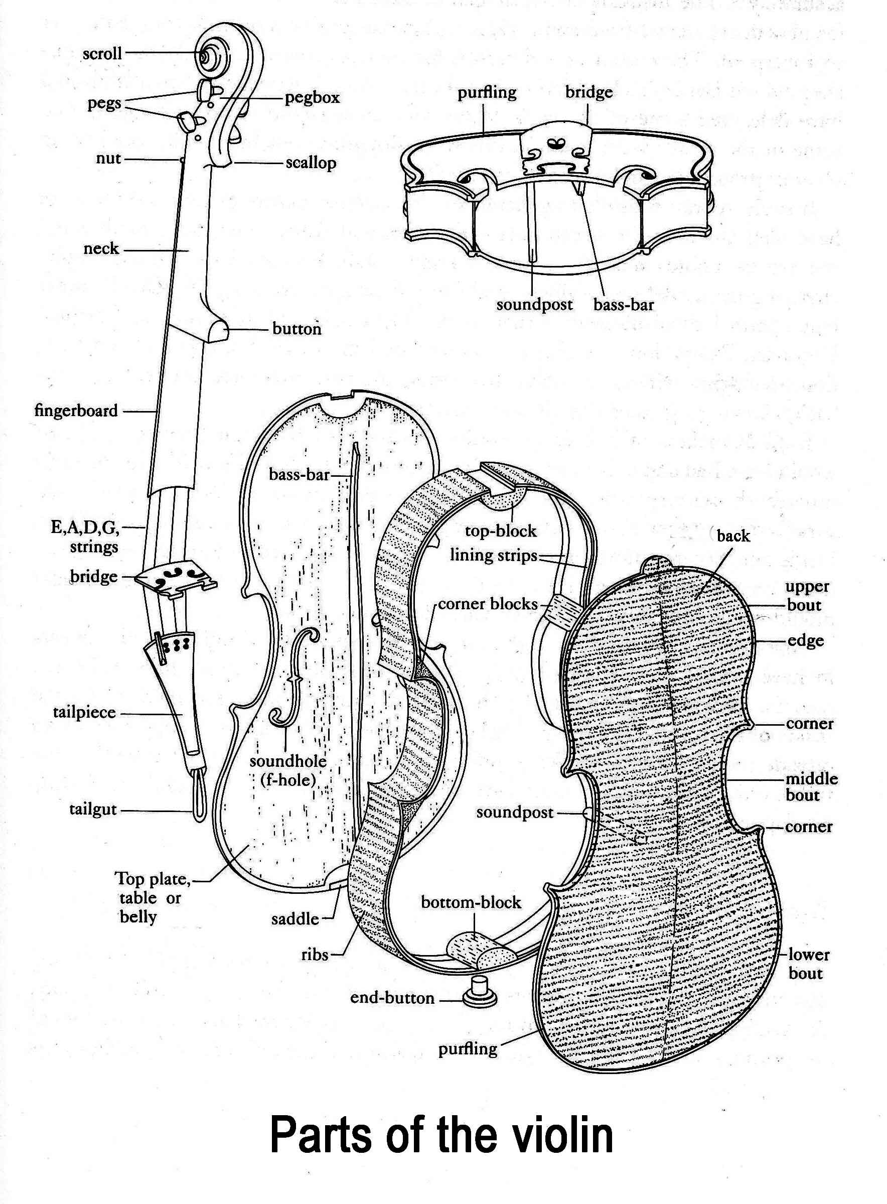 Look At The Parts Of The Violin Can You Find The Scroll