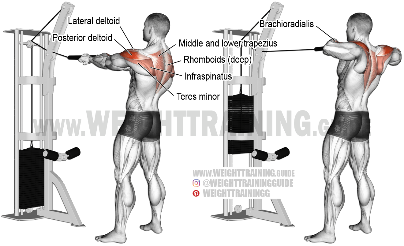 Standing Cable Rear Delt Row With Rope A Compound