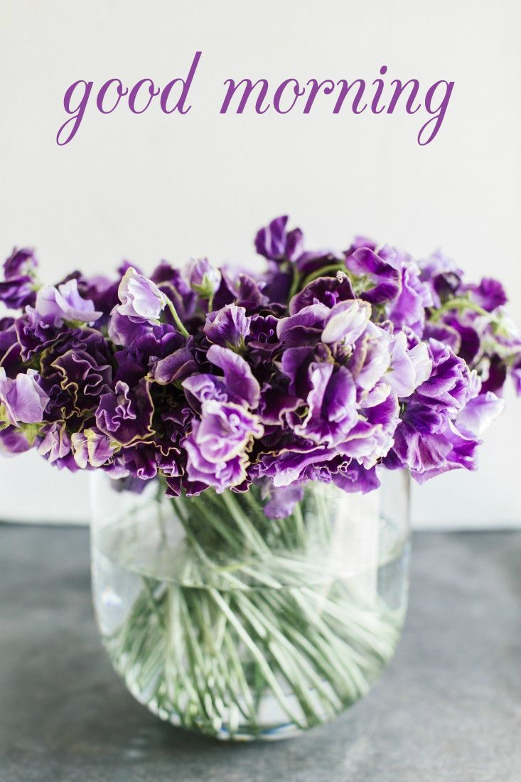 34 Good Morning Quotes to Make your Day! Flower